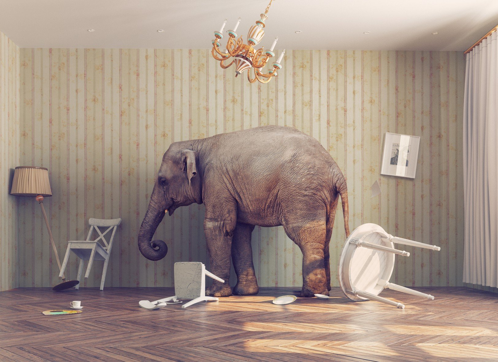 Elefant Raum.jpg