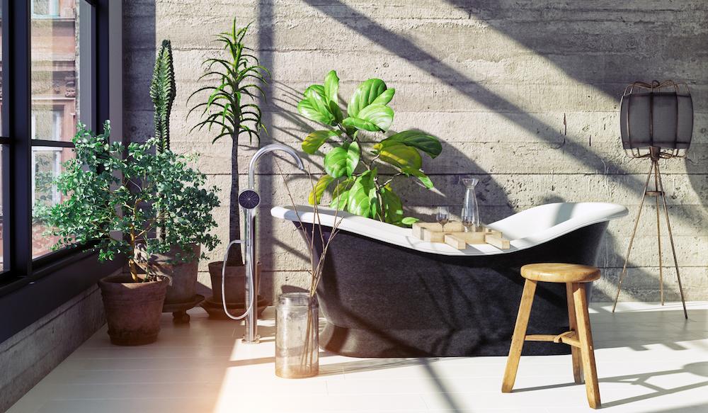 Natürliche Luftreiniger für dein Zuhause
