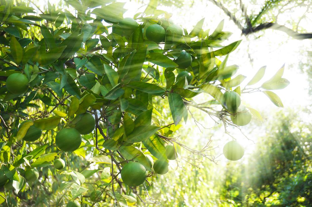 Schweppes Selection: natürliche Essenz als Basis